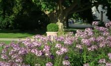 jardin-des-plantes-photo-1920-photo-5-jeff-grossin